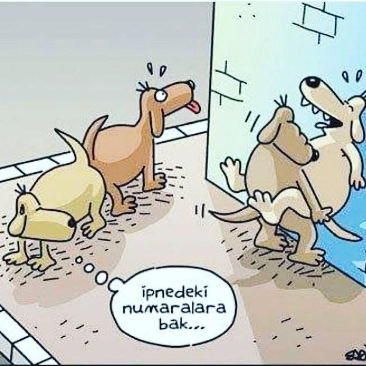 #omg #komikkarikatür #karikatür #belaltı #belaltıkarikatür #mizah http://turkrazzi.com/ipost/1523814442579941529/?code=BUlrSl5lliZ