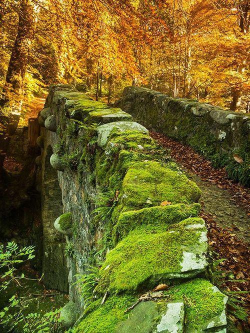 Medieval Bridge, Tollymore Forest Park, Northern Ireland