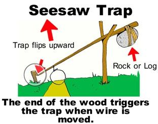 A good trap for the beginner because it is easy to balance properly. The weight can be a rock or log.  The weight is held up right by a long limb that is caught on a figure 7  holder. The idea is when the animal takes the bait, the limb moves, the  weight falls, and the animal is flipped into the air. This trap may or  may not kill the animal, but the weight will keep small game from  running away.