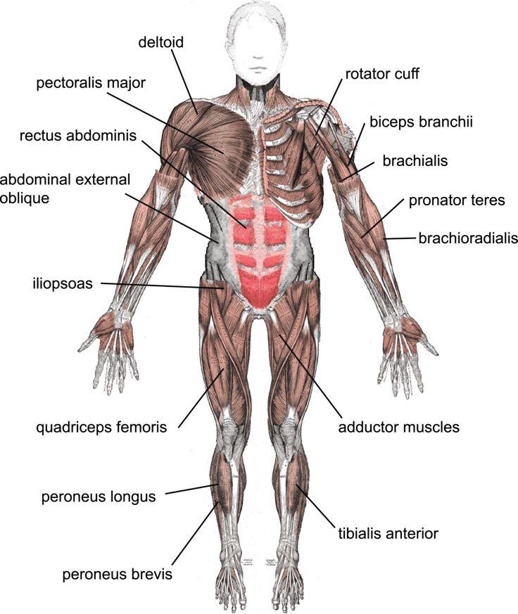 21 best PBC images on Pinterest | Autoimmune disease, Pa school and ...