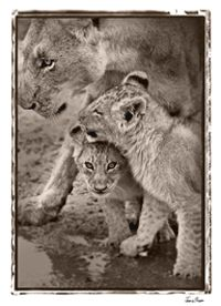 TROWBRIDGE - Jamie Thom Safari - Jamie Thom has gained world-wide recognition for his wildlife photographs and he has been named Wildlife Ph...