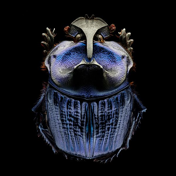 Best Insects Images On Pinterest Insects Moth And Beetle - Each of these macro bug photographs is made from thousands of individual images
