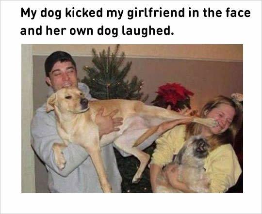 boyfriend dog