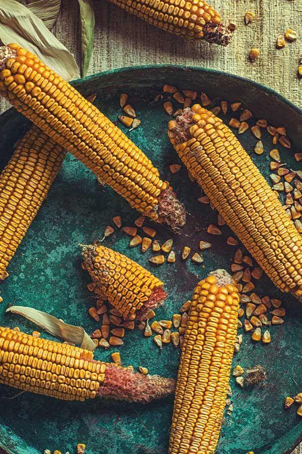 Is Corn a Vegetable? Colores de otoño, Otoño