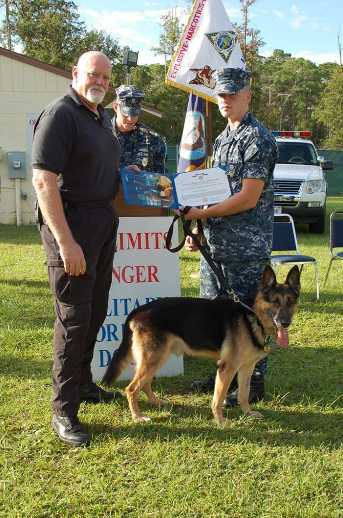 Special Forces Working Dogs   the Navy and Marine Corps Commendation Medal to Military Working Dog ...