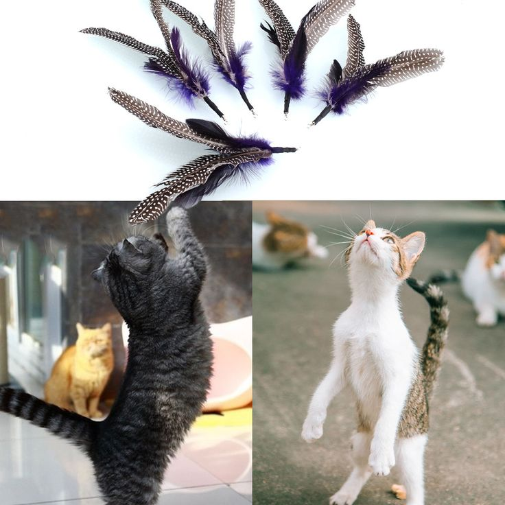 New Quality 5PCS REFILLS for Da Bird feather Wand Cat Toy Interactive Toys Refill Home Drop Shipping