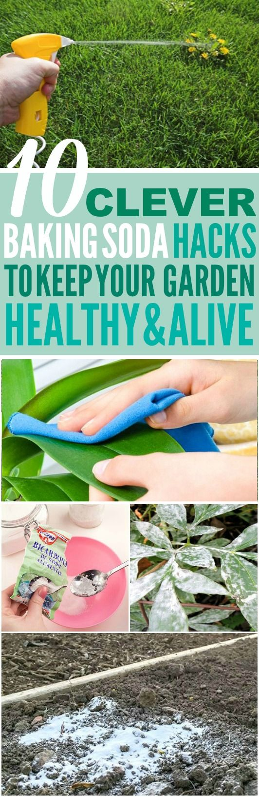 These 10 ways to use baking soda in the garden are THE BEST! I'm so happy I found these AMAZING tips! Now I have some great ways to use baking soda in my garden and keep my garden healthy and alive! Definitely pinning!