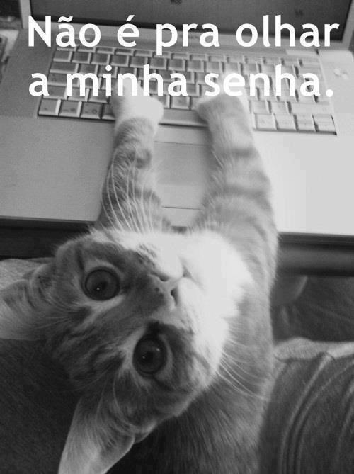 """""""miauuu...NÃO PODE OLHAR A MINHA SENHA..."""" #frases , # humor , #cats"""