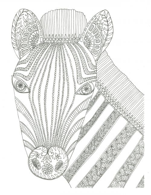 Zebra Adult Coloring Page