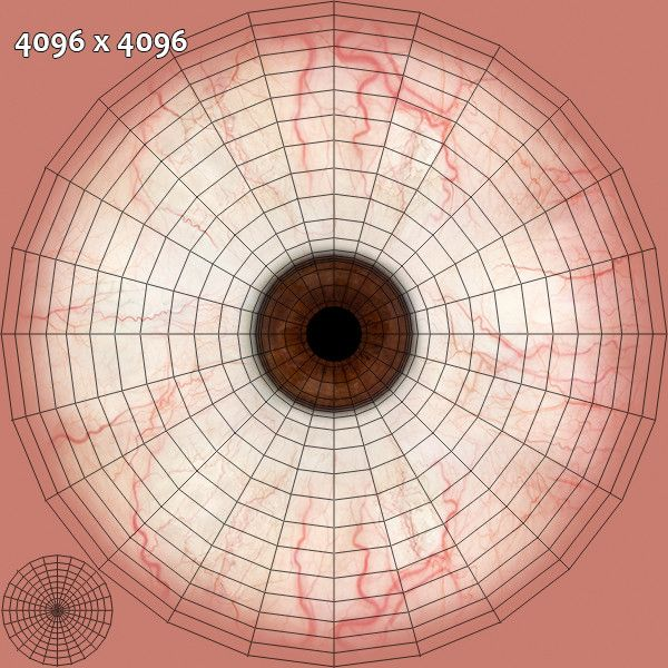 55 Best Realistic Human Eye Images On Pinterest Tutorials Eyes