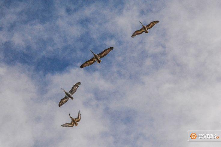 Ο ουρανός γεμάτος εκπλήξεις στο Δέλτα Έβρου.