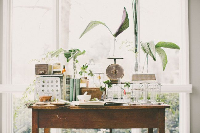 a vintage botanical science set we just love!