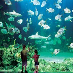 Sydney Aquarium Darling Harbour