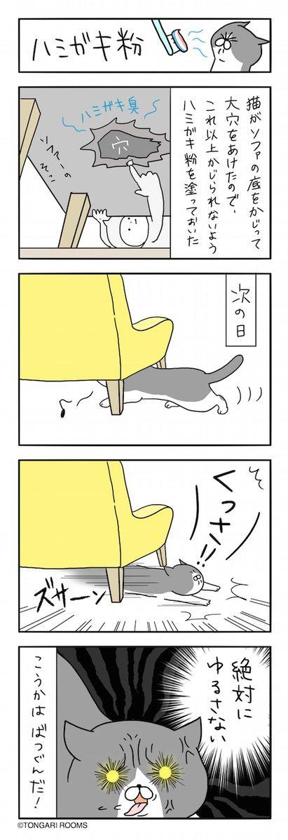ハミガキ粉