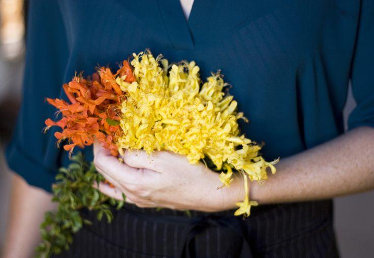 Chef Caro de Waal with the Cape honeysuckle flowers, Bastiaankloof, Western Cape.