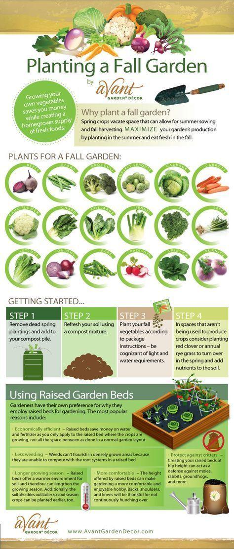 Essbare Gartenarbeit für Anfänger: So bauen Sie Ihre eigenen Lebensmittel an
