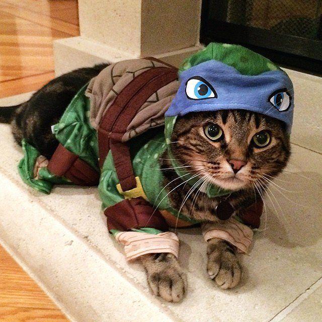 Teenage Mutant Ninja Turtle | Pet costumes cat, Cute cat costumes, Cat  halloween costume