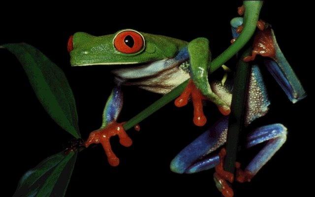 Frog, beautiful frog!