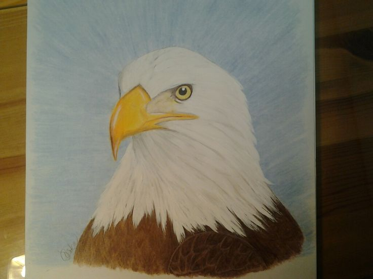 Bald eagle ... prisma colored pencils, pastels and acrylic paint