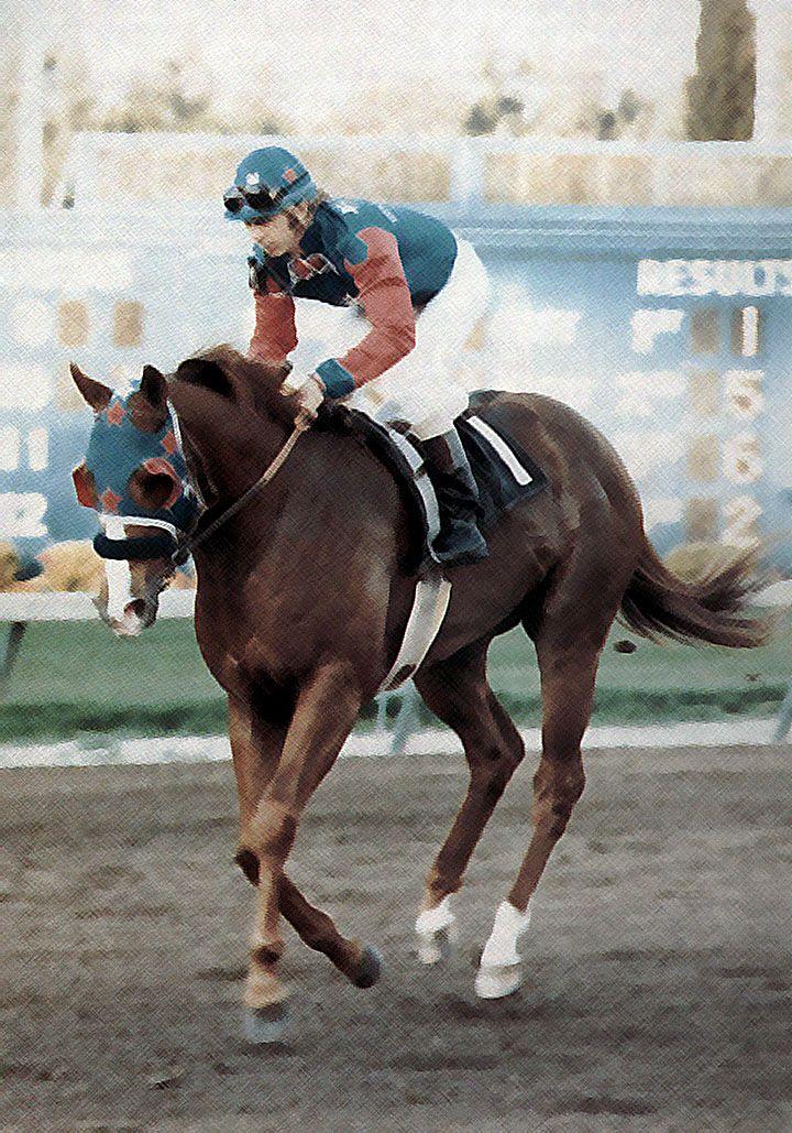 Dash For Cash, My horse's great grandpa!!!