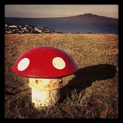 Mushrooms, Mount Victoria. Devonport. Auckland.