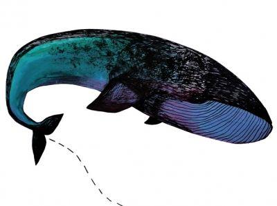 Wieloryb // Agata Juszczak