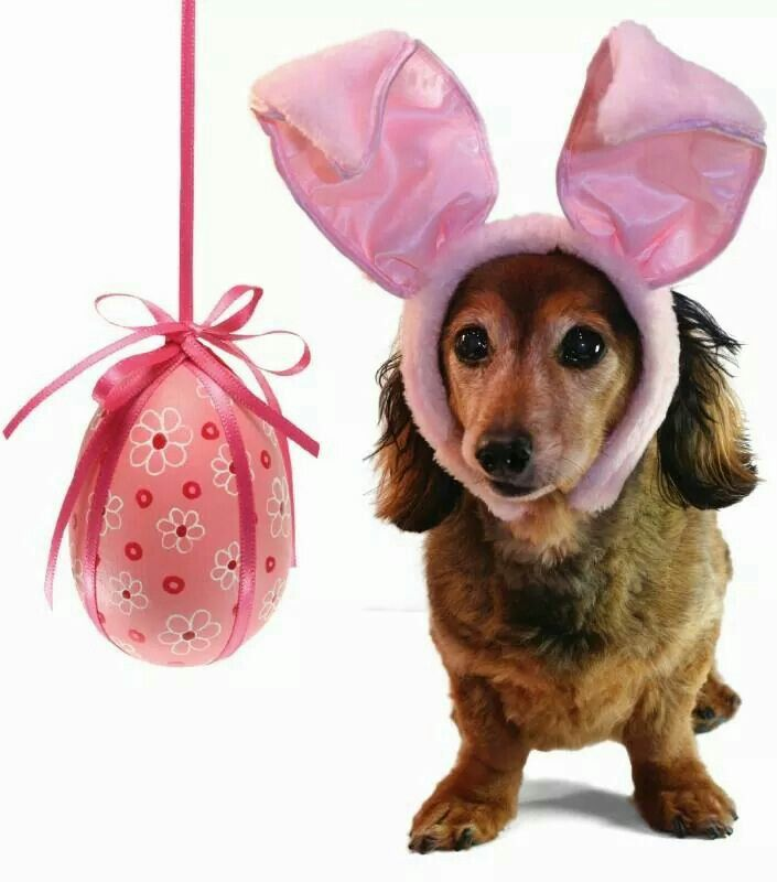 30 best hoppy easter easter ideas for dogs images on pinterest free easters here greeting card negle Images