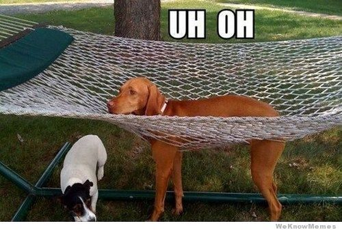Lol ... Oh man ... Picture the struggle once stuck and the epic fail the humans will face trying to get him out
