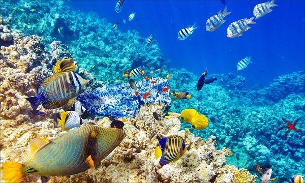 """""""Conhecer para intervir"""" é o lema deste projecto de investigação científica que defende uma exploração sustentável dos recursos marinhos do mar profundo."""