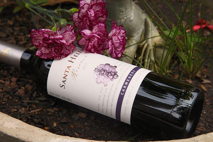 A reconhecida vinícola Santa Helena nos brinda com a uva carménère, variedade emblemática do Chile, em excelente performance nesse vinho tinto! #wine #vinho #vinhotinto #carmenere #Chile