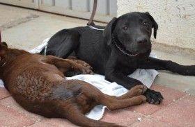 Inicia campaña de esterilización canina y felina en Oaxaca