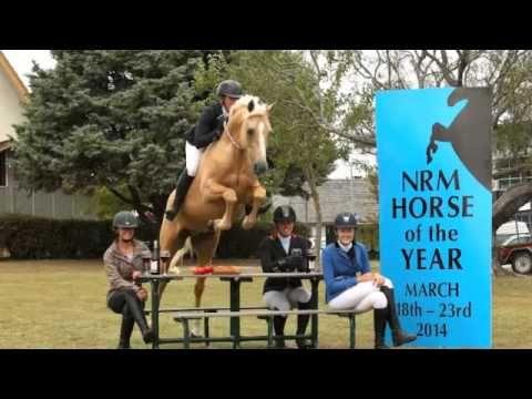 Showtym Spotlight: Horse of the Year PR Stunt 2014 - YouTube