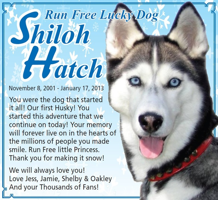 Shiloh from Gone to the Snow Dogs passed away.