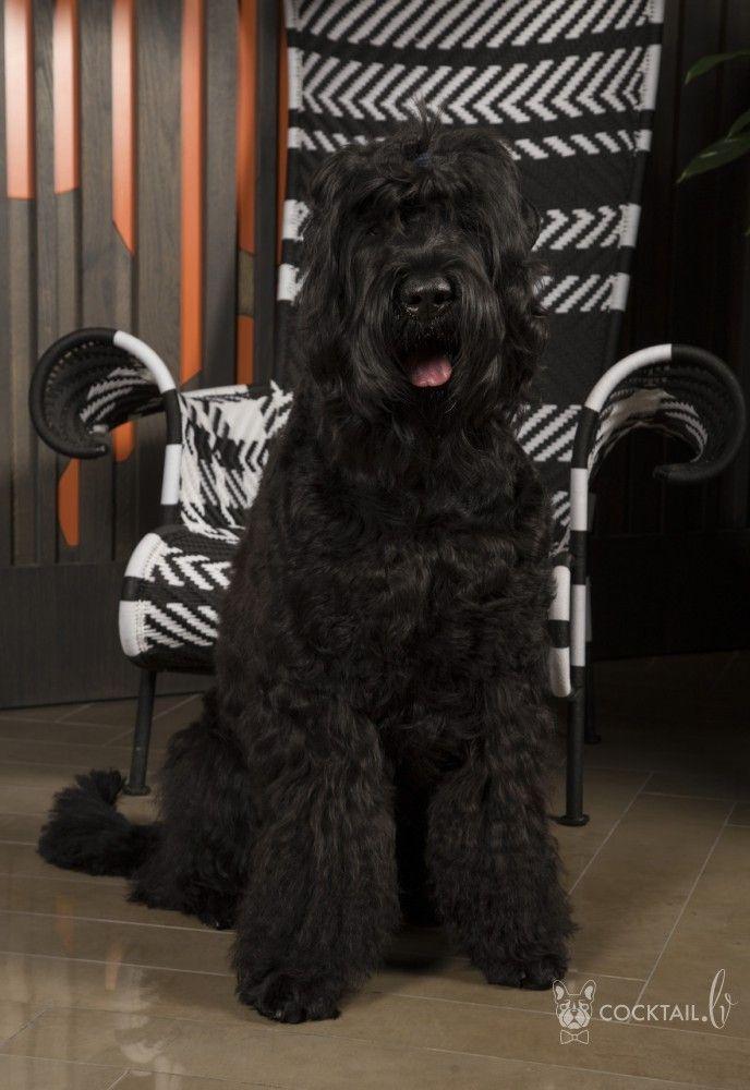 Дневник съемок для календаря AMBER DOG CALENDAR 2017 :: Коктейль новостей из мира зверей