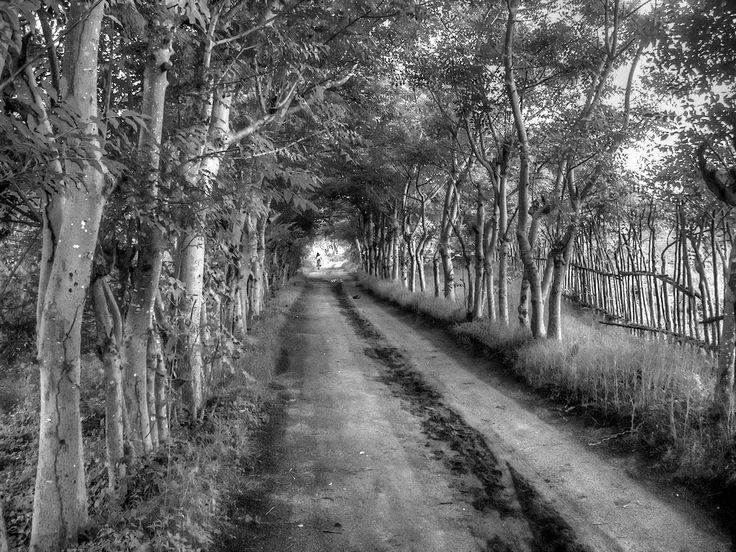 Village road in Gili Trawangan