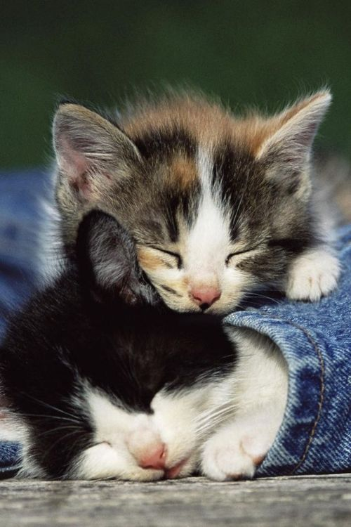 kittens and blue jeans <3 From imgfave.com