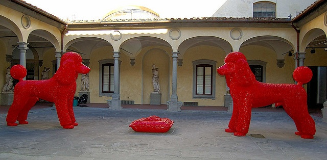 Giant Red Poodles, the Accademia, Florence Italy    This modern work stands in a courtyard of the Accademia in Florence - a museum of classical sculpture and paintings; the same museum that houses Michelangelo's David!