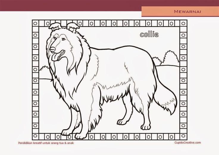 lembar kerajinan anak paud (balita/TK/SD), mewarnai anjing collie