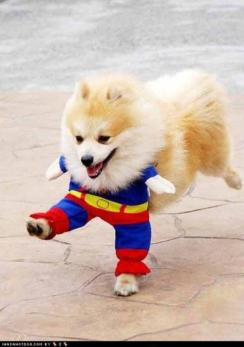 He is faster than a speeding tennis ball, more powerful than a chew toy, and able to leap tall fences in a single bound!