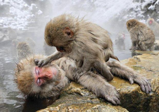 #Coccole #scimmie #somiglianze #uomo #animali #natura #comportamenti
