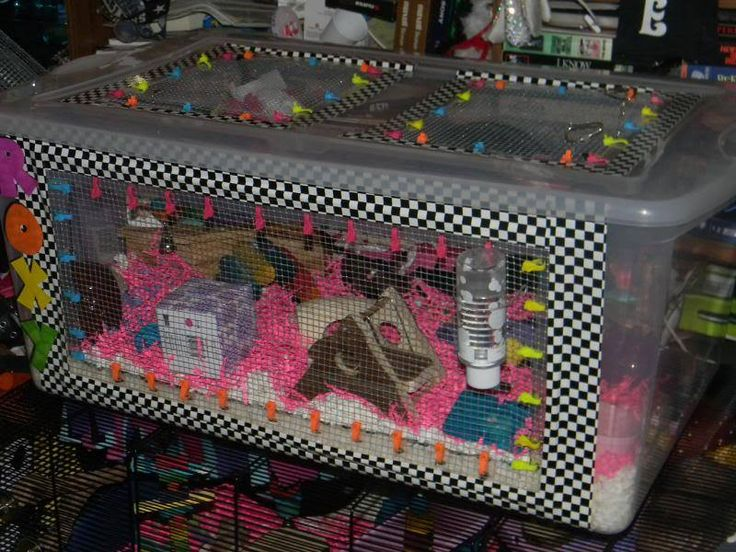 Diy hamster cage bin cage hamster cages hermit crabs for Diy hamster bin cage