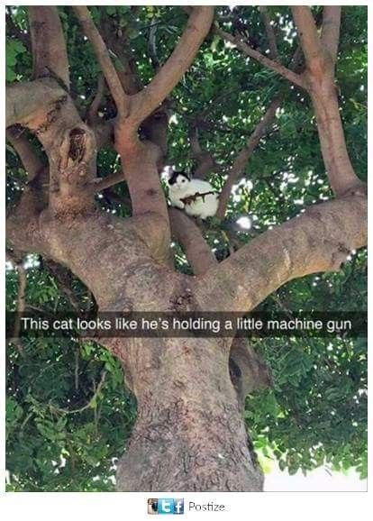 This cat looks like he's holding a little machine gun
