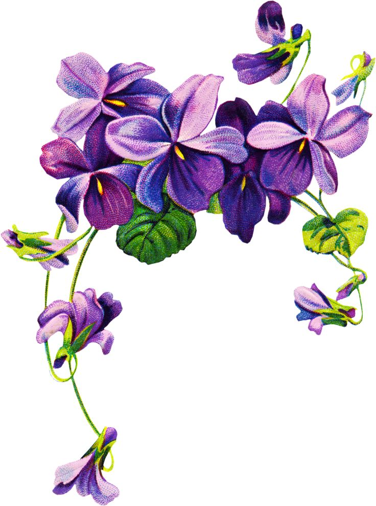 Violet Flower Tattoo Drawing | Free Clipart, Vintage graphics, and 3D images for your creative ...