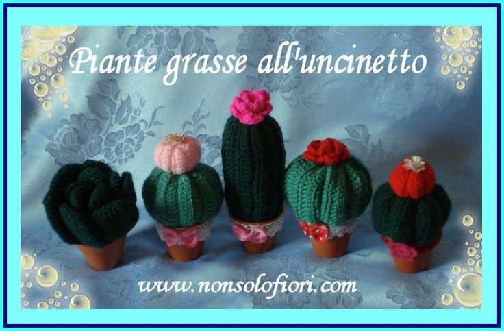 1000+ images about Piante grasse alluncinetto su Pinterest