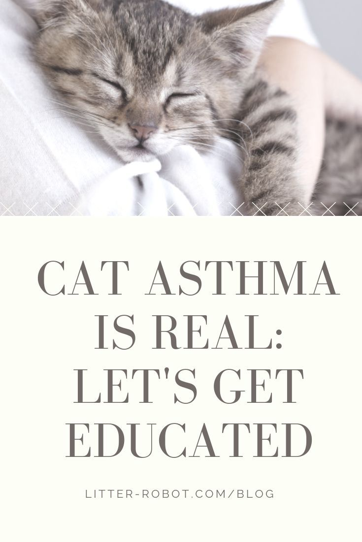 Cat Asthma Is Real Let S Get Educated Litter Robot Blog Cat Asthma Asthma Cat Care