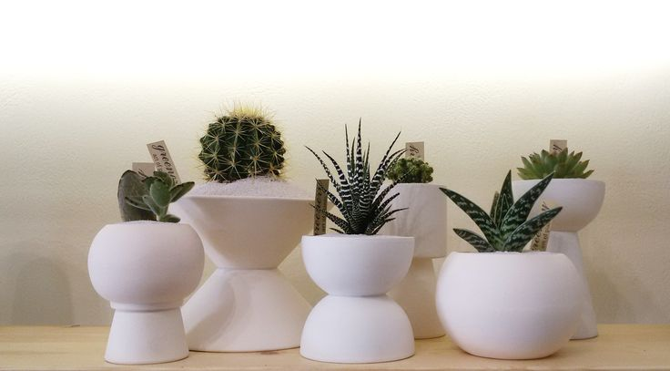 Minimal ceramic pots! #greenery #greeneryartofplants #minimal #white #cactus #succulents #chania #crete