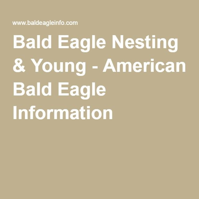 Bald Eagle Nesting & Young - American Bald Eagle Information