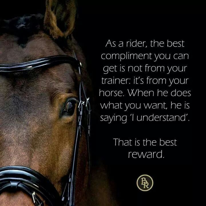 472 best Horse Quotes images on Pinterest | Equestrian ...