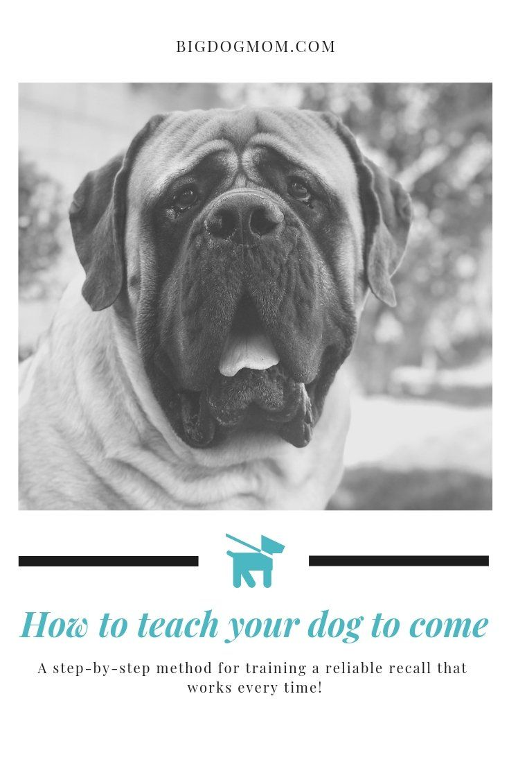 How To Teach A Dog To Come Train A Dog Recall That Works Every