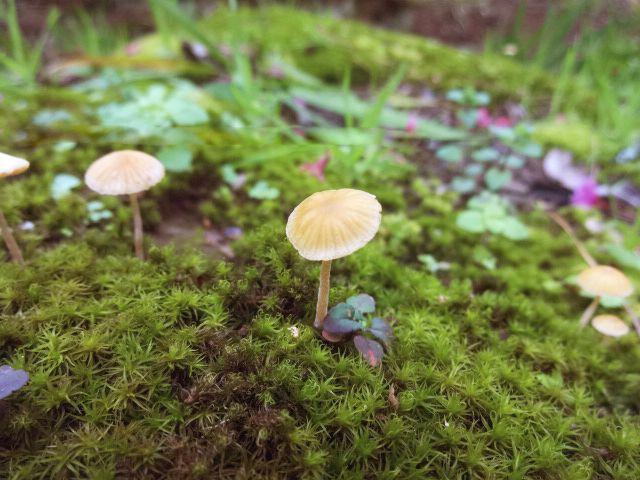 Twee: Cogumelos encantados